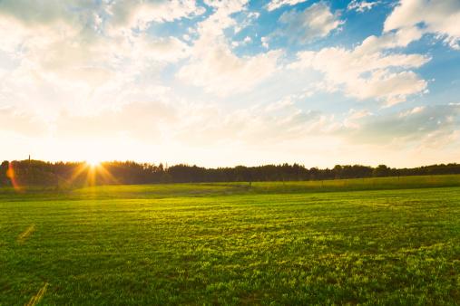 田畑「夕日の緑の牧草地」:スマホ壁紙(14)