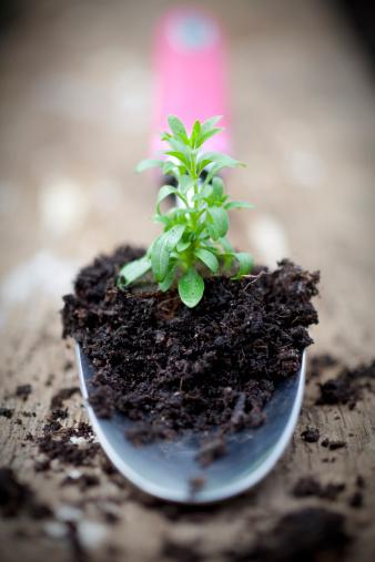 Planting「Gardening Trowel Holding Seedling Plant」:スマホ壁紙(1)