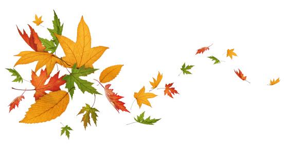 かえでの葉「秋のスピニング」:スマホ壁紙(15)