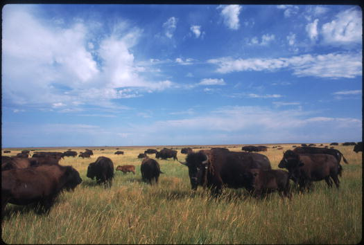 Animal Hair「Paradise On Earth In The Black Hills Of South Dakota」:写真・画像(18)[壁紙.com]