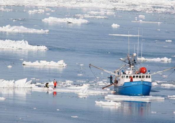 North Atlantic Ocean「Canada Raises Quota For Controversial Seal Hunt」:写真・画像(11)[壁紙.com]