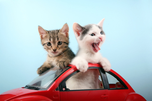 Cat「Happy kittens on vacations」:スマホ壁紙(1)