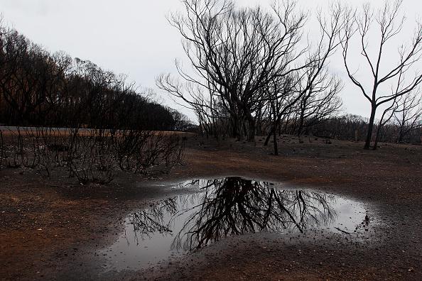 Shower「Kangaroo Island Bushfire Threat Increases As Residents Are Told To Evacuate」:写真・画像(17)[壁紙.com]