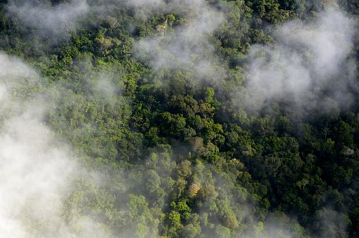 Amazon Rainforest「Brazil, Para, Amazon rainforest and clouds」:スマホ壁紙(11)