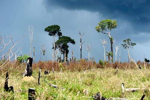 Amazon Rainforest「Brazil, Para, Itaituba, Amazon rainforest, slash and burn, reclamation of pastureland」:スマホ壁紙(16)