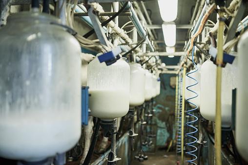 Dairy Product「Precious produce」:スマホ壁紙(2)