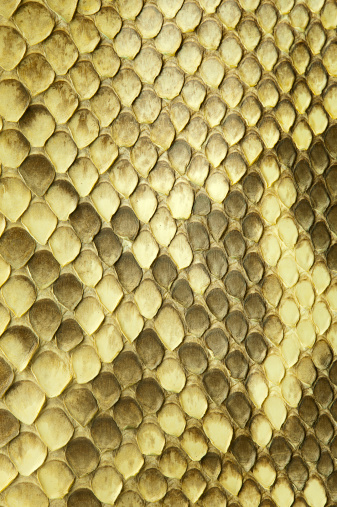 Reptile「Python snake skin」:スマホ壁紙(18)