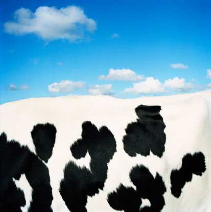 Cowhide「Holstein-Friesian cow, side view, close-up of coat」:スマホ壁紙(9)