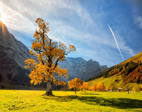 Boreal Forest「Colorful autumn at Ahornboden in Karwendel Alps」:スマホ壁紙(16)