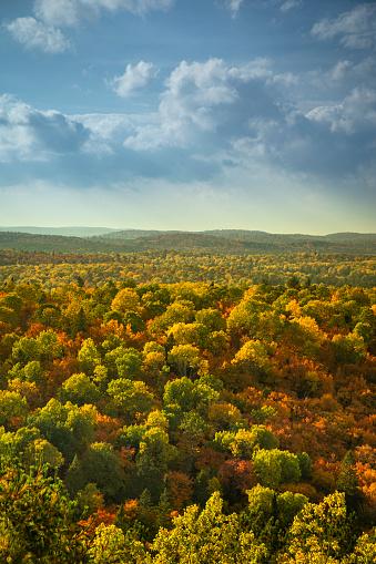 かえでの葉「カラフルな秋シーズン荒野森と木」:スマホ壁紙(5)