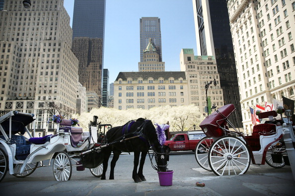 Horse「NYC Mayor De Blasio Facing Stiff Opposition To Proposed Horse Carriage Ban」:写真・画像(14)[壁紙.com]
