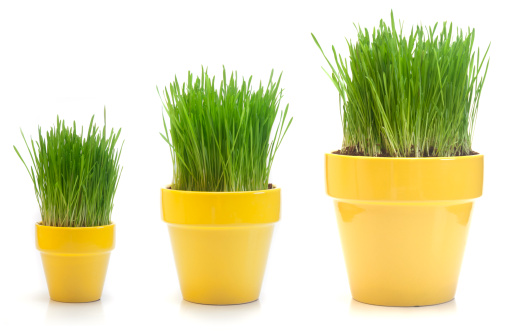Contrasts「Growing Wheat Grass」:スマホ壁紙(19)