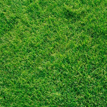 Looking Down「Grass」:スマホ壁紙(18)
