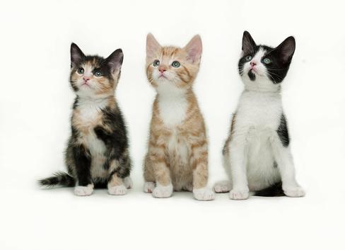 Three Animals「Spellbound kittens」:スマホ壁紙(19)