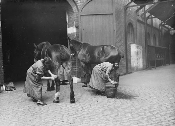 Horse「Grooming Horses」:写真・画像(4)[壁紙.com]