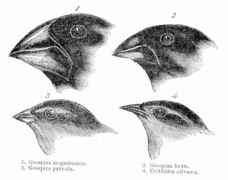 1990-1999「Finches observed by Charles Darwin」:スマホ壁紙(9)