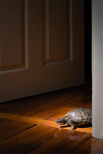 大昔の「Tortoise in a doorway」:スマホ壁紙(9)