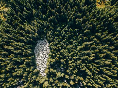 コーカサス山脈「松林のドローン ビュー」:スマホ壁紙(2)