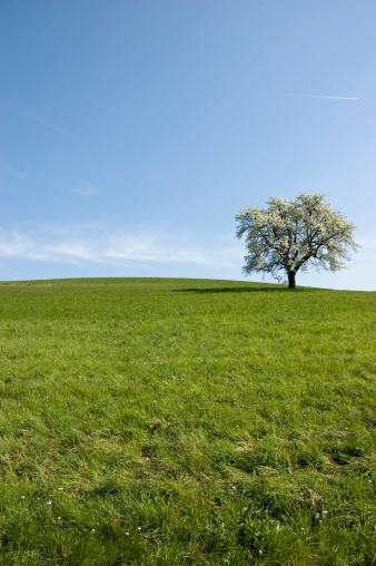 Happiness「single apple tree beautiful landscape」:スマホ壁紙(9)
