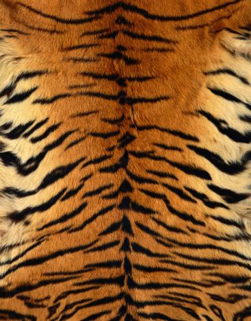 Tiger「Bengal Tiger Fur」:スマホ壁紙(18)