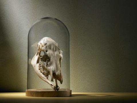 背景「Elk skull under glass dome」:スマホ壁紙(9)