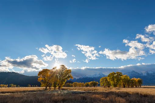 Aspen Tree「USA, Wyoming, Rocky Mountains, Grand Teton National Park, aspens in autumn」:スマホ壁紙(1)