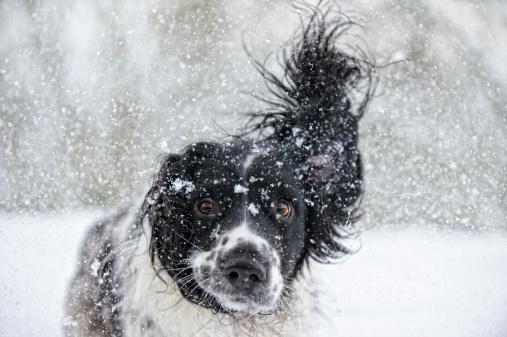 Baby animal「Abominable Snowdog」:スマホ壁紙(5)