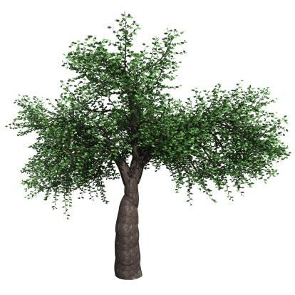 Intricacy「tree」:スマホ壁紙(17)