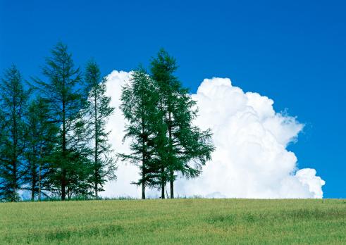 Hokkaido「Tree」:スマホ壁紙(19)
