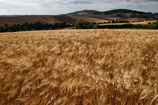 Wheat「Val d'Orcia, World Heitage Site, Tuscany, Italy」:スマホ壁紙(12)