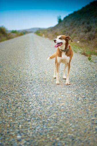 Walking「Don't abandon him. He would never do it!」:スマホ壁紙(10)