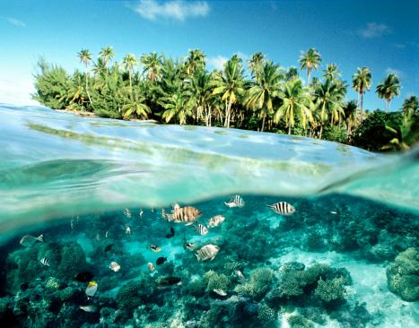 Ecosystem「Fish swimming by island」:スマホ壁紙(6)