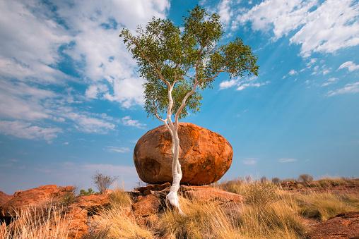 Indigenous Culture「Karlu Karlu or Devils Marbles Conservation Reserve, Northern Territory, Australia」:スマホ壁紙(19)