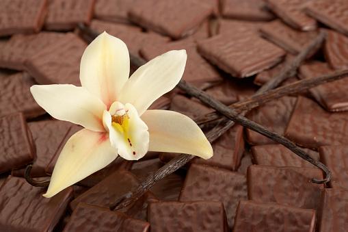 Dessert「vanilla and chocolate」:スマホ壁紙(0)