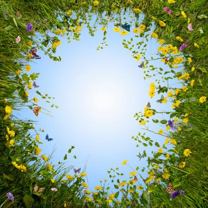 Wildflower「Circular Meadow」:スマホ壁紙(17)