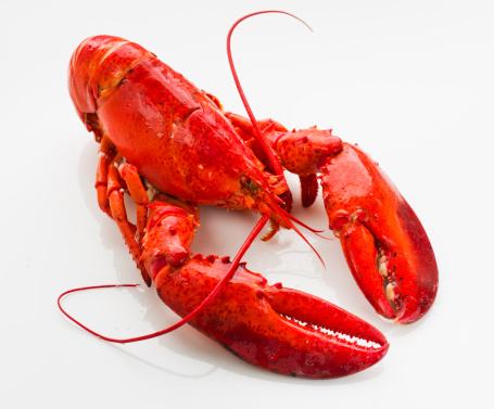 Seafood「Cooked lobster」:スマホ壁紙(19)