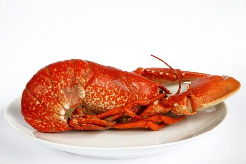楽園「Cooked lobster on white plate.」:スマホ壁紙(13)