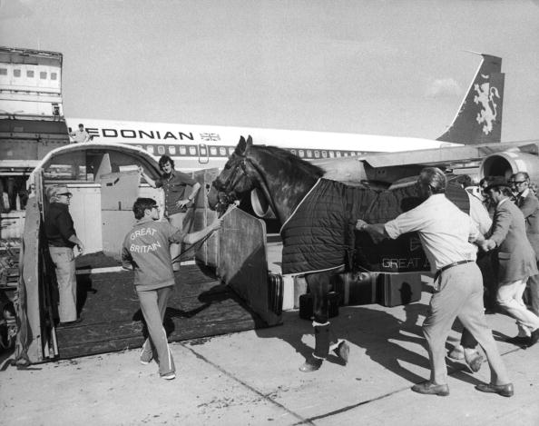 Horse「Olympic Pegasus」:写真・画像(5)[壁紙.com]