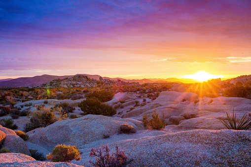 Atmosphere「Sunrise at Joshua Tree National Park」:スマホ壁紙(10)