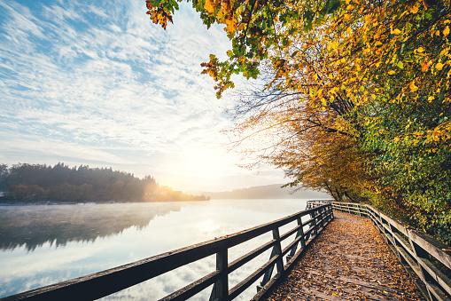 Footpath「Autumn Path By The Lake」:スマホ壁紙(4)