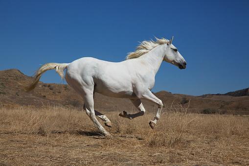 Animal Mane「white male horse in desert landscape」:スマホ壁紙(12)