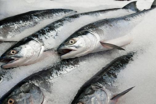 建築「Wild sockeye salmon displayed for sale  in ice」:スマホ壁紙(4)