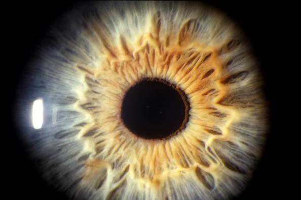 Iris - Eye「The Sense Of Sight」:写真・画像(2)[壁紙.com]