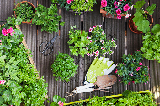Planting「Planting herbs and flowers for indoor farming on a balcony」:スマホ壁紙(0)