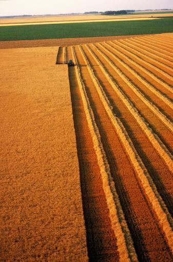 Approaching「Wheat harvesting, aerial view, Minnesota, USA」:スマホ壁紙(1)