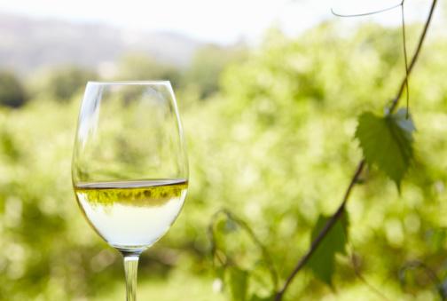 田畑「glass of white wine at vineyard」:スマホ壁紙(14)