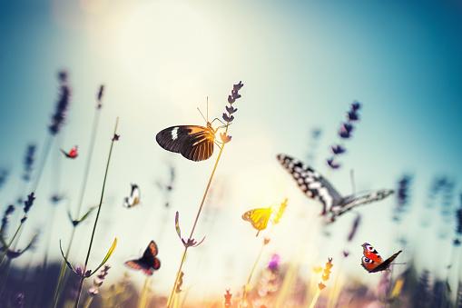 Tranquil Scene「Meadow With Butterflies」:スマホ壁紙(18)