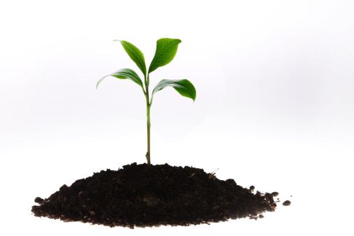 Planting「Tea leaves」:スマホ壁紙(15)