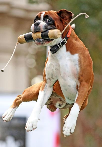 "Taco「Melbourne Dog Lovers Enjoy ""Common Woof Games""」:写真・画像(11)[壁紙.com]"