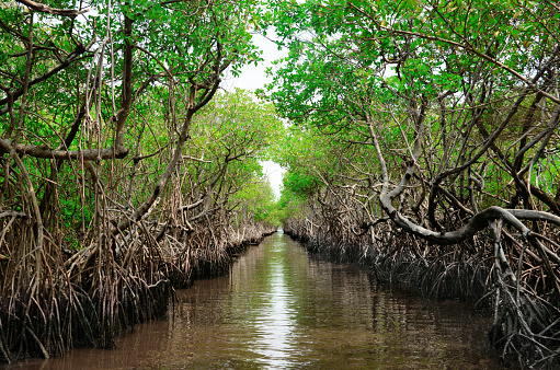 Ecosystem「Protected ecological carbon capture mangrove in Everglade City, Florida」:スマホ壁紙(6)